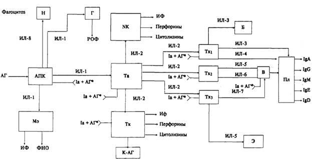 Схема 6.1. Иммунный ответ